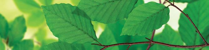 VIU LEED Cowichan Campus green leaves